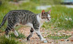 katten weglopen na een verhuizing