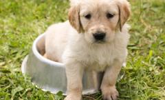 puppy voeding