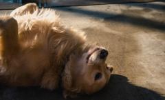jeuk hond