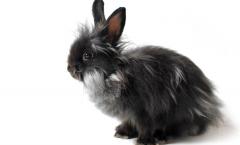 vachtverzorging konijn borstelen