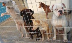 adoptiehonden spanje ace charity