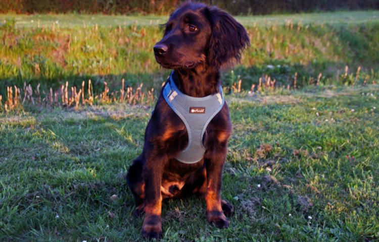tuigje halsband omdoen hond