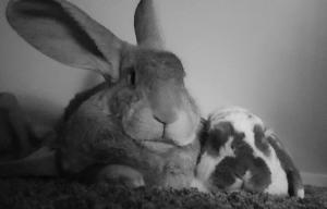 konijnen testen kauwwortels