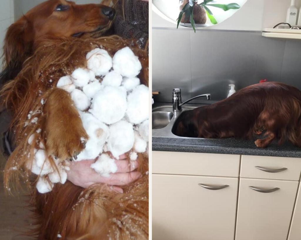 hond sneeuw winter wintertips