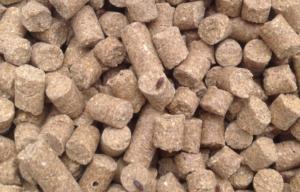 Broodkever in hondenbrokken