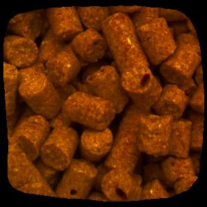Kevers (broodkevers) op hondenbrokken beestjes