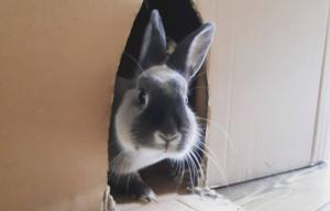 Muis de nijnerij konijn bijt agressie