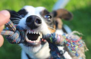 Los hond oefening