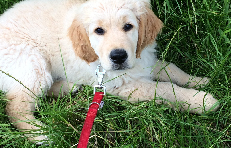 puppy socialiseren