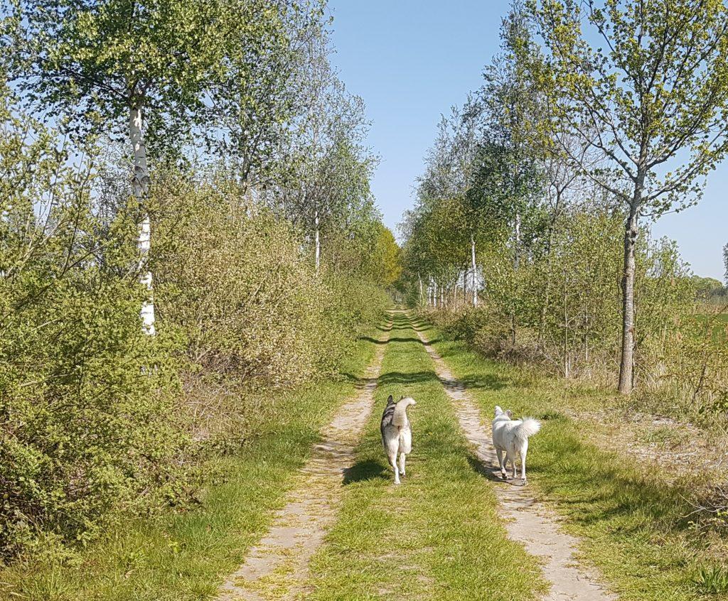 spel sociaal hond wandelen