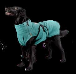 chillcoat hond