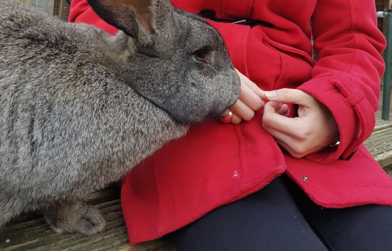 konijn hanteren oppakken handen