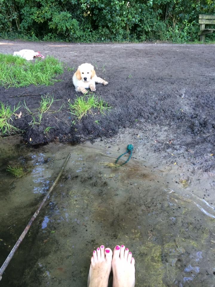 zwemmen hond oefenen