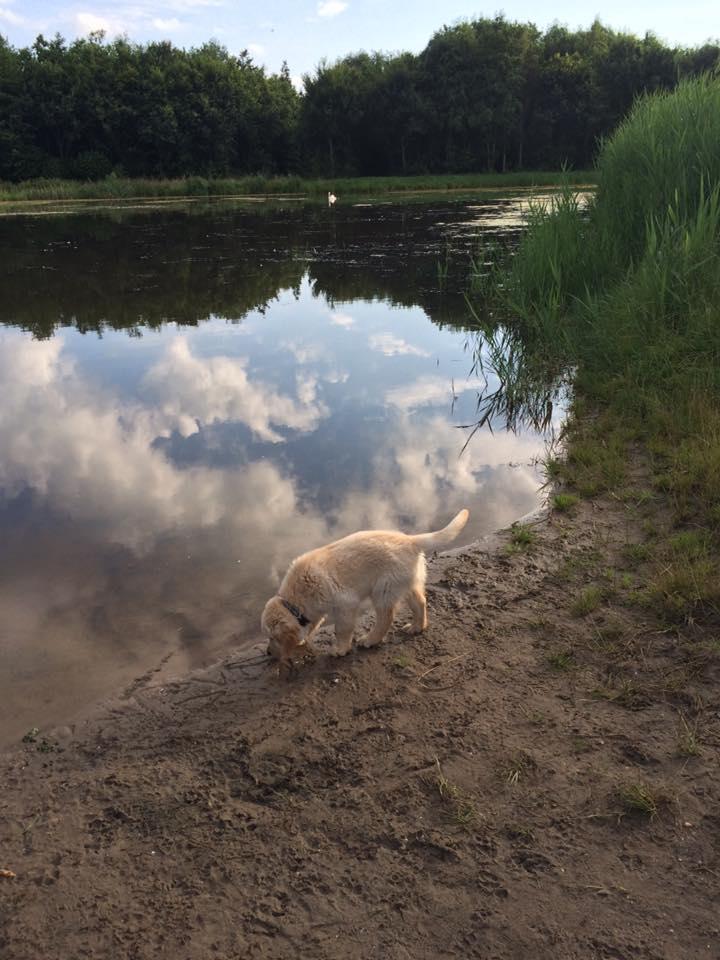 hond puppy oefent bij water
