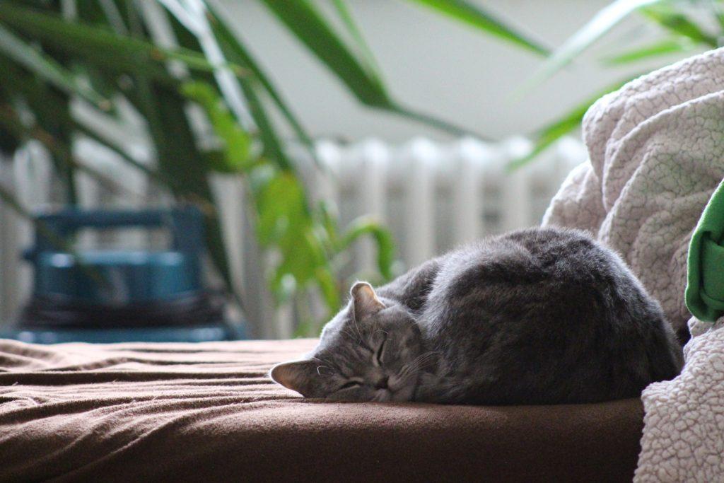 kat slaapt op bank opvoeden