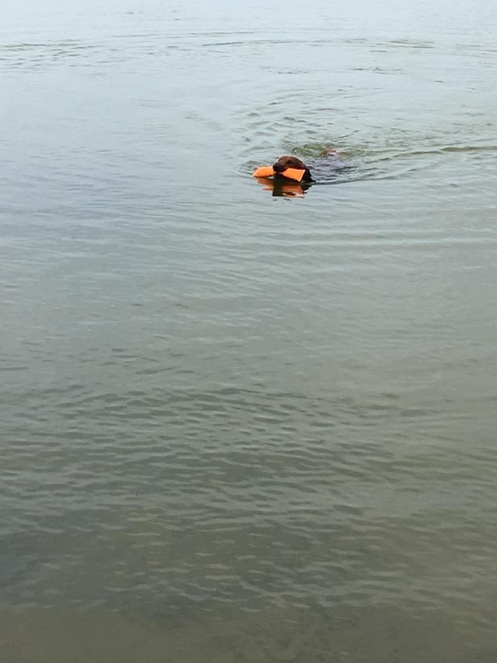 zwemmen hond