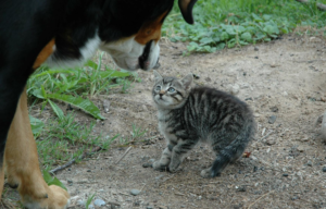 introductie hond kat