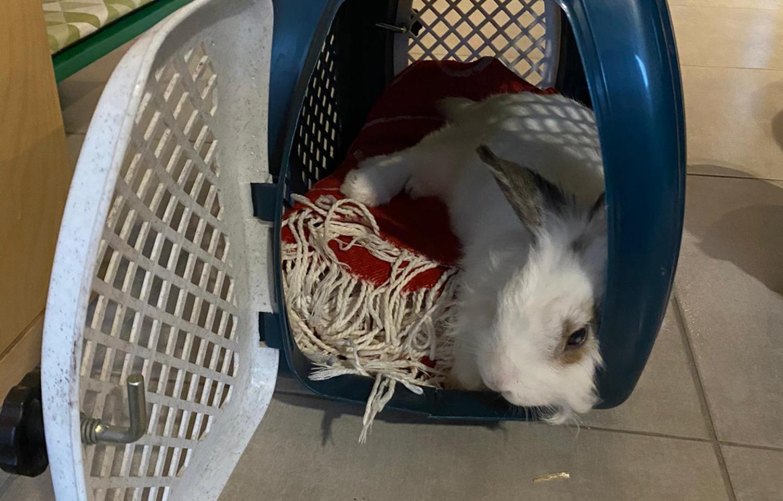 aanschaf konijn