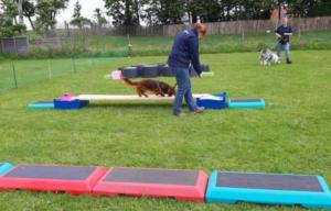 Trainen hond spieren