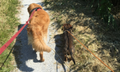 Uitlaten hond