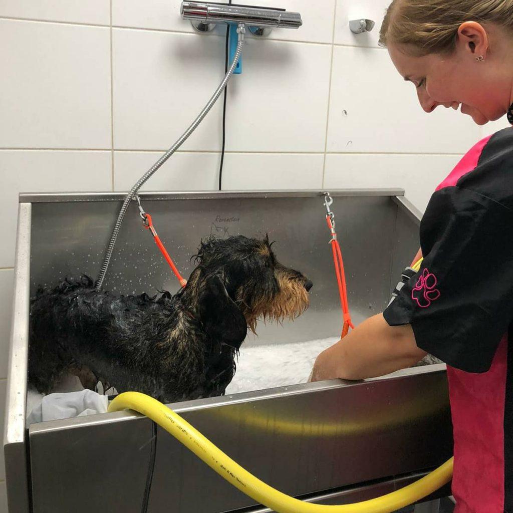 wassen in trimsalon
