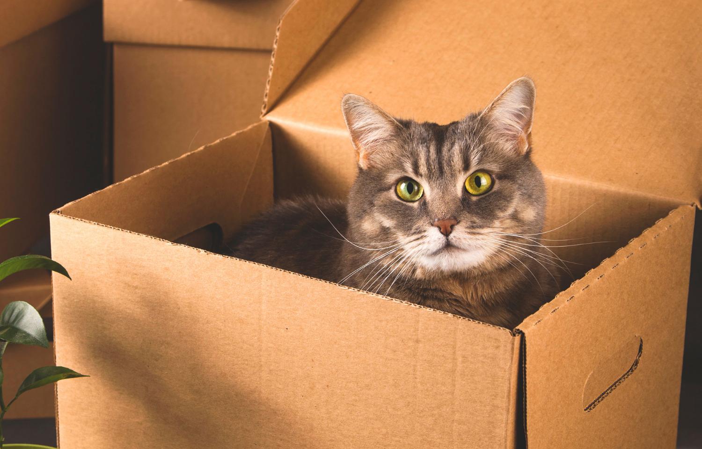 kat verhuizen stress