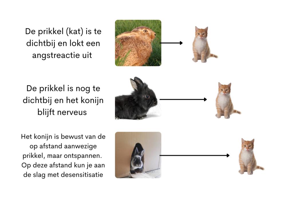 habituatie, desensitisatie en counter-conditionering konijn