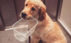 Puppy jonge hond spullen pakken tandjes