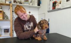 preventie hond check shiatsu artrose
