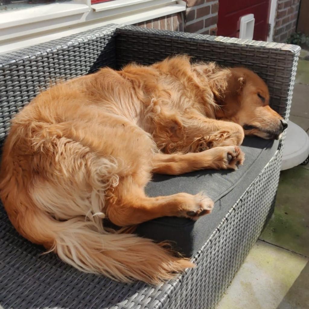 hond stress relaxen