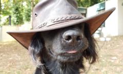 vakantie centerparcs met hond